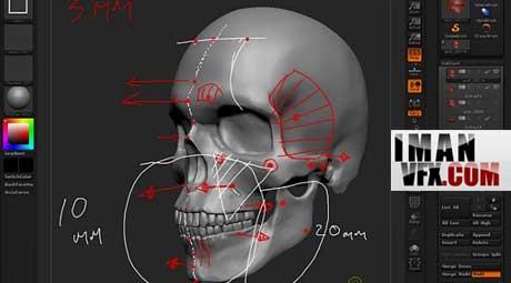 آناتومی صورت برای مدلسازی با ZBrush