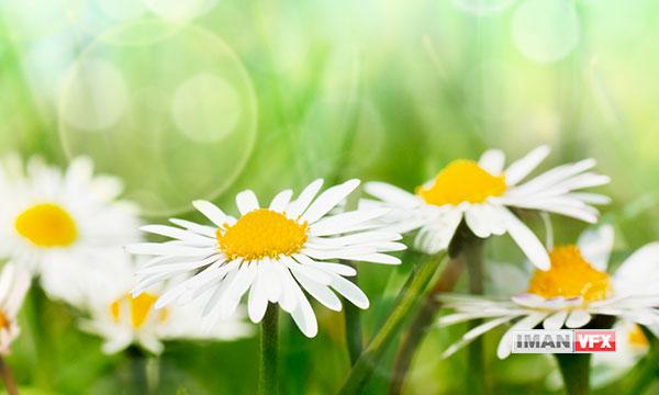 تصاویر وکتور بهاری