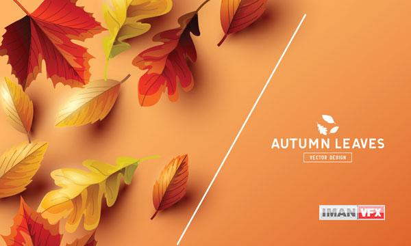 تصاویر برگ های رنگی درختان